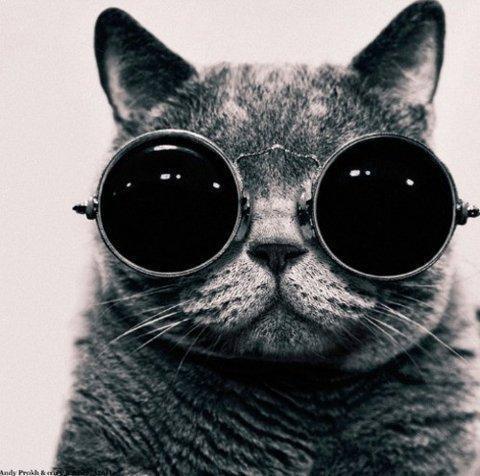 black-and-white-cat-photography-sunglasses-Favim.com-331954