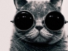 black-and-white-cat-photography-sunglasses-Favim.com-331954