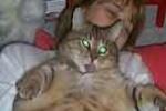 bloatcat